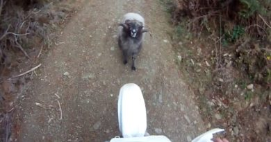bélier vs motocross